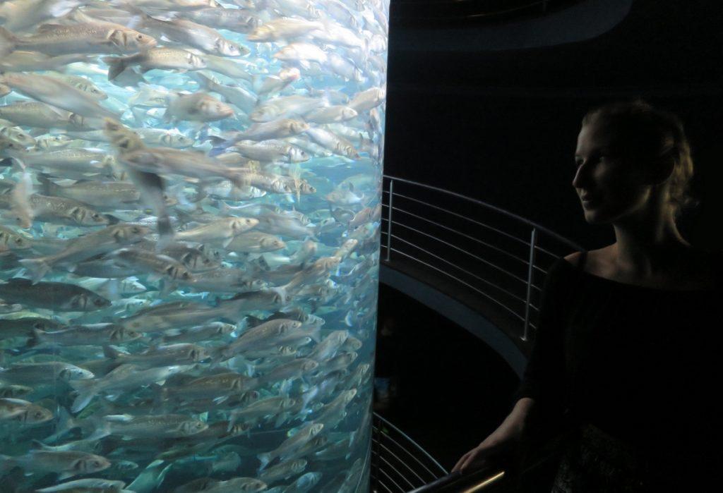 Ryby v Loro Parque